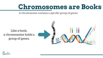 Chromosomes are books